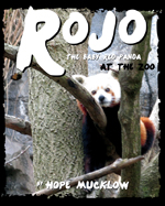 Rojo the Baby Red Panda at the Zoo